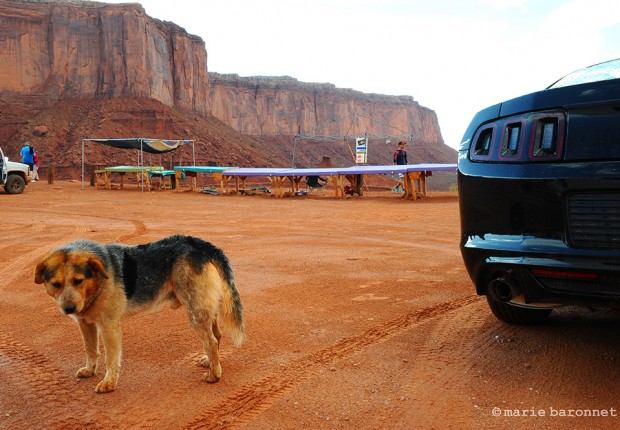Monument Valley Utah Arizona 2013. Four hundred horses power by a reservation dog